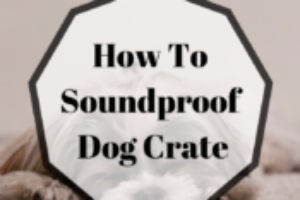 3 Easy Ways! How To Soundproof Dog Crate: